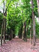 藤枝森林遊樂區:051255