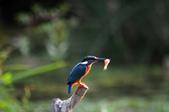 鳥松濕地拍鳥-2:130322 (14).jpg