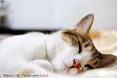 下雨天的愛睏貓:120612 (12).jpg