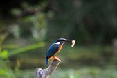 鳥松濕地拍鳥-2:130322 (16).jpg