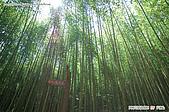 八仙山國家森林遊樂區:080910 (12).jpg