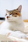 下雨天的愛睏貓:120612 (14).jpg