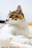 下雨天的愛睏貓:120612 (15).jpg