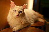 元氣貓組曲:IMG_3341元氣貓組曲.JPG