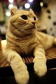 元氣貓組曲:IMG_3452元氣貓組曲.JPG
