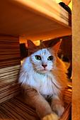 元氣貓組曲:IMG_3470元氣貓組曲.JPG