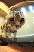 元氣貓組曲:IMG_3867元氣貓組曲.JPG