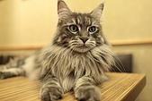 元氣貓組曲:IMG_3963元氣貓組曲.JPG