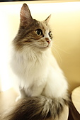 元氣貓組曲:IMG_3501元氣貓組曲.JPG