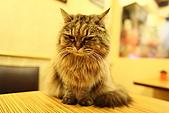 元氣貓組曲:IMG_3527元氣貓組曲.JPG