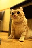 元氣貓組曲:IMG_3586元氣貓組曲.JPG