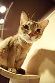 元氣貓組曲:IMG_3652元氣貓組曲.JPG
