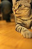 元氣貓組曲:IMG_3375元氣貓組曲.JPG
