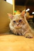 元氣貓組曲:IMG_3386.JPG
