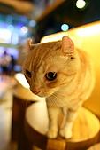元氣貓組曲:IMG_3399元氣貓組曲.JPG