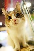 元氣貓組曲:IMG_3424元氣貓組曲.JPG