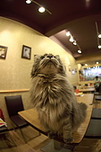 元氣貓組曲:IMG_3698元氣貓組曲.JPG