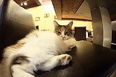 元氣貓組曲:IMG_3743元氣貓組曲.JPG