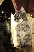 元氣貓組曲:IMG_3779-2元氣貓組曲.JPG