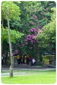 20110821_大安森林公園之什麼都有:Canon EOS 5D Mark II-20110821-0809-29.jpg