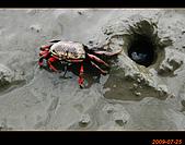 20090725_高美濕地&伸港一日遊:nEO_IMG_IMG_4754.jpg