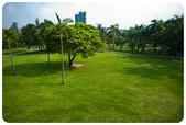 20110821_大安森林公園之什麼都有:Canon EOS 5D Mark II-20110821-0816-30.jpg