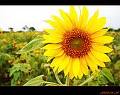 20090524_桃園_向陽農場:nEO_IMG_IMG_4009.jpg