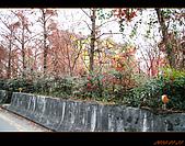 20100123~24_清境/合歡山-二日遊:nEO_IMG_IMG_6483.jpg