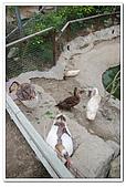 20100619_八里_兔子餐廳&海岸公園:nEO_IMG_IMG_0304.jpg