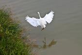 20110821_下雨天的大湖:Canon EOS 50D-20110821-1548-10.jpg