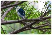 20110821_大安森林公園之什麼都有:Canon EOS 5D Mark II-20110821-0721-3.jpg