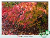 Xuite活動投稿相簿:滿地楓葉