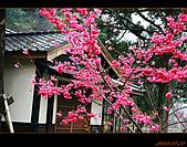 20100123~24_清境/合歡山-二日遊:nEO_IMG_IMG_6589.jpg