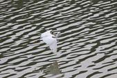 20110821_下雨天的大湖:Canon EOS 50D-20110821-1550-11.jpg