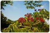 20110821_大安森林公園之什麼都有:Canon EOS 5D Mark II-20110821-0829-33.jpg