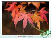Xuite活動投稿相簿:楓紅