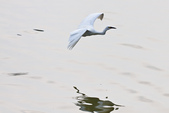 20110821_下雨天的大湖:Canon EOS 50D-20110821-1550-12.jpg