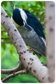 20110821_大安森林公園之什麼都有:Canon EOS 5D Mark II-20110821-0722-4.jpg