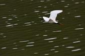 20110821_下雨天的大湖:Canon EOS 50D-20110821-1551-13.jpg