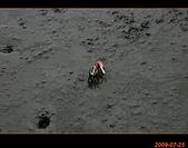 20090725_高美濕地&伸港一日遊:nEO_IMG_IMG_4723.jpg