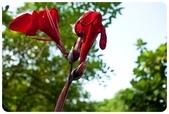 20110821_大安森林公園之什麼都有:Canon EOS 5D Mark II-20110821-0832-35.jpg