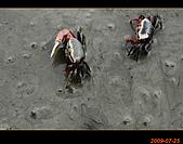 20090725_高美濕地&伸港一日遊:nEO_IMG_IMG_4750.jpg