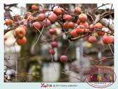Xuite活動投稿相簿:蘋果王