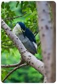 20110821_大安森林公園之什麼都有:Canon EOS 5D Mark II-20110821-0722-5.jpg