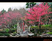 20100123~24_清境/合歡山-二日遊:nEO_IMG_IMG_6593.jpg