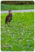 20110821_大安森林公園之什麼都有:Canon EOS 5D Mark II-20110821-0728-6.jpg