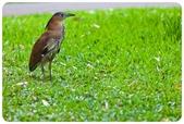 20110821_大安森林公園之什麼都有:Canon EOS 5D Mark II-20110821-0729-7.jpg