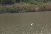 20110821_下雨天的大湖:Canon EOS 50D-20110821-1551-16.jpg