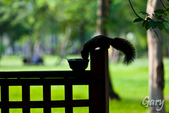 20110821_大安森林公園之松鼠過馬路:Canon EOS 5D Mark II-20110821-0742-14.jpg