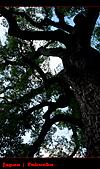 20101010_日本˙福岡行_Day 5:20101010-0756-10.jpg